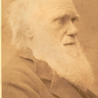 Portrait of elderly Charles Darwin, cabinet card.