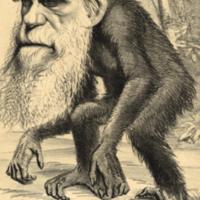 """A Venerable Orang-Outang…"" Darwin Caricature."