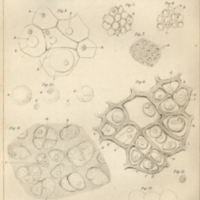 Diagram of animal and plant cells.