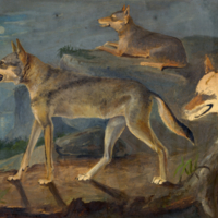 Wolves. 1. Lupus gigas 2. Lupus occidentalis