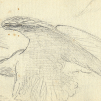 Double Eagle sketch, 1813