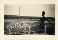 Grave near Verdun